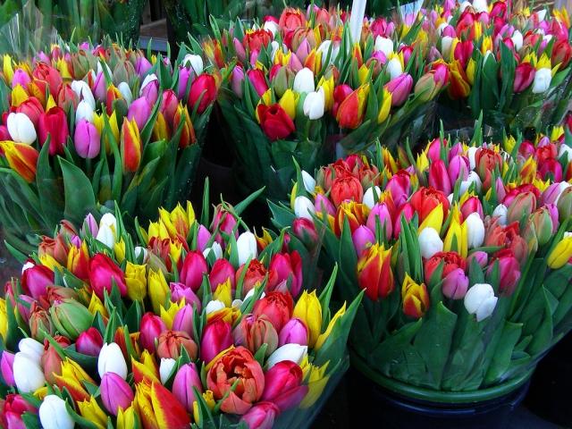 flowers market amsterdam