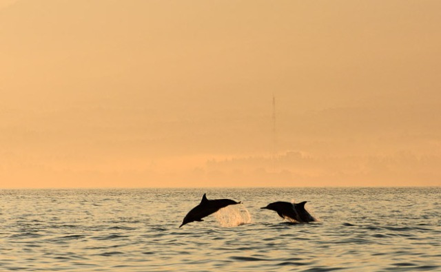 delfiny-na-bali