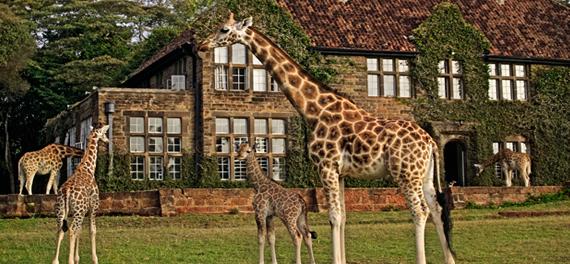 ken_nairobi_giraffe_main
