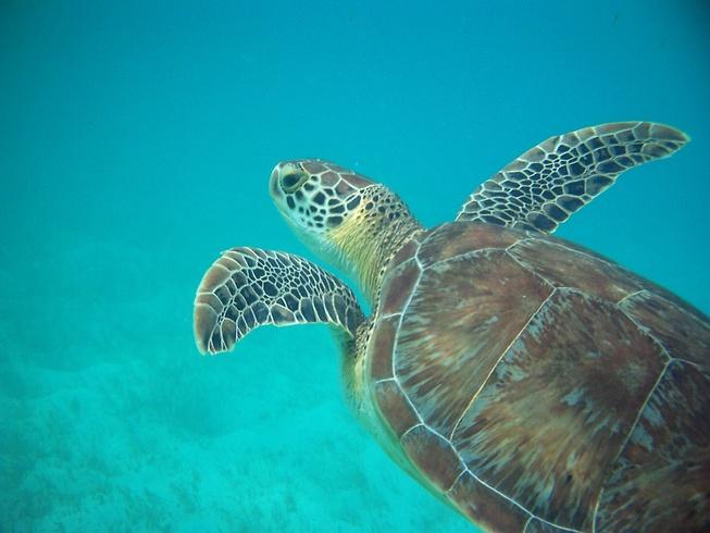 tartaruga_marina